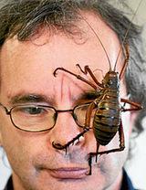 Τα μεγαλύτερα έντομα στον κόσμο