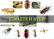 Έντομα αποθηκών