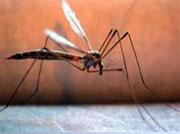 Κουνούπια, μείωση των πληθυσμών