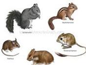 Ποντίκια, Αρουραίοι και Τυφλοπόντικες