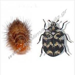 Έντομα - Γουναρικών και Υφασμάτων