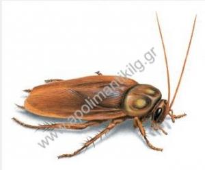 Καταπολέμηση μεγάλης κατσαρίδας